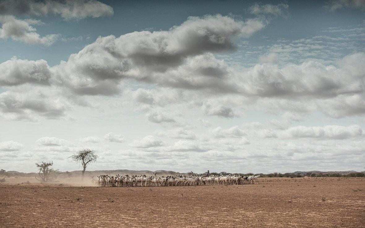 Eth_drought_goatherd_jpg.jpg