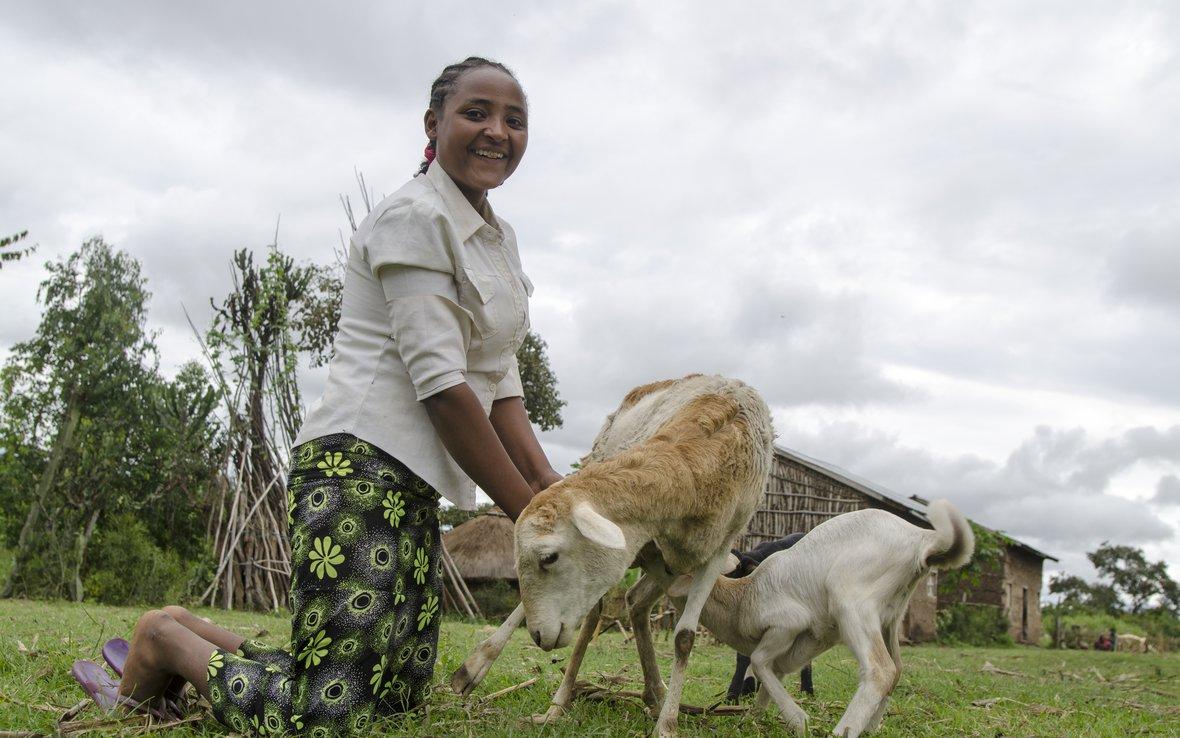 Ethiopia-lambs-for-school.jpg