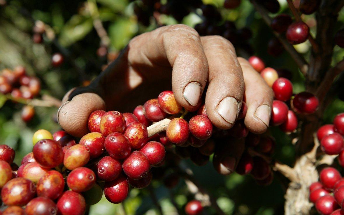 Food chain hands coffee.jpg