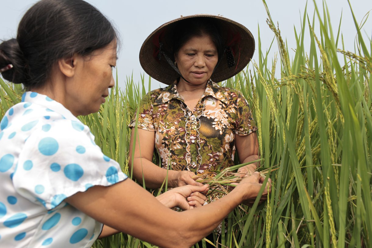 Vietnamese farmer Hoang Thi Lien, 53, right, and Nguyen Thi My, 49, are specialists in the System of Rice Intensification. They teach other farmers innovative techniques to produce more rice using less water and seed.