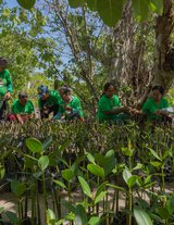 Mangrove reforestation in Eastern Samar, Philippines