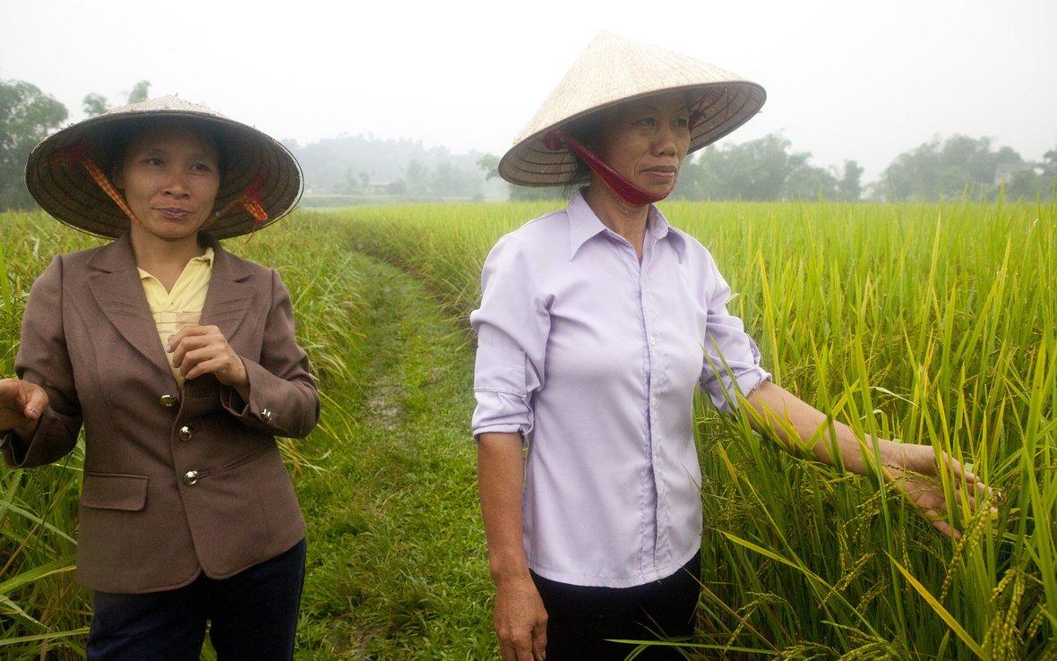 Vietnam-farmers-SRI-OUS_48318.JPG