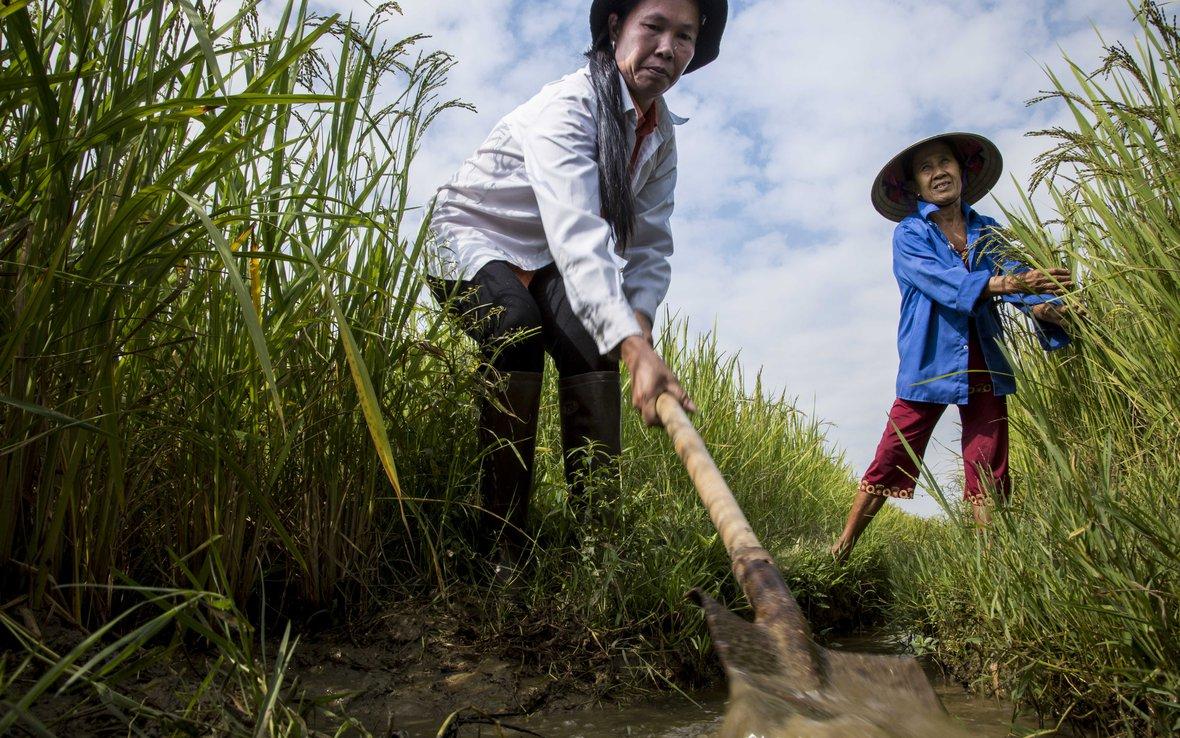 Vietnam_SRI_farmers_Oxfam_99A3096__web.jpg