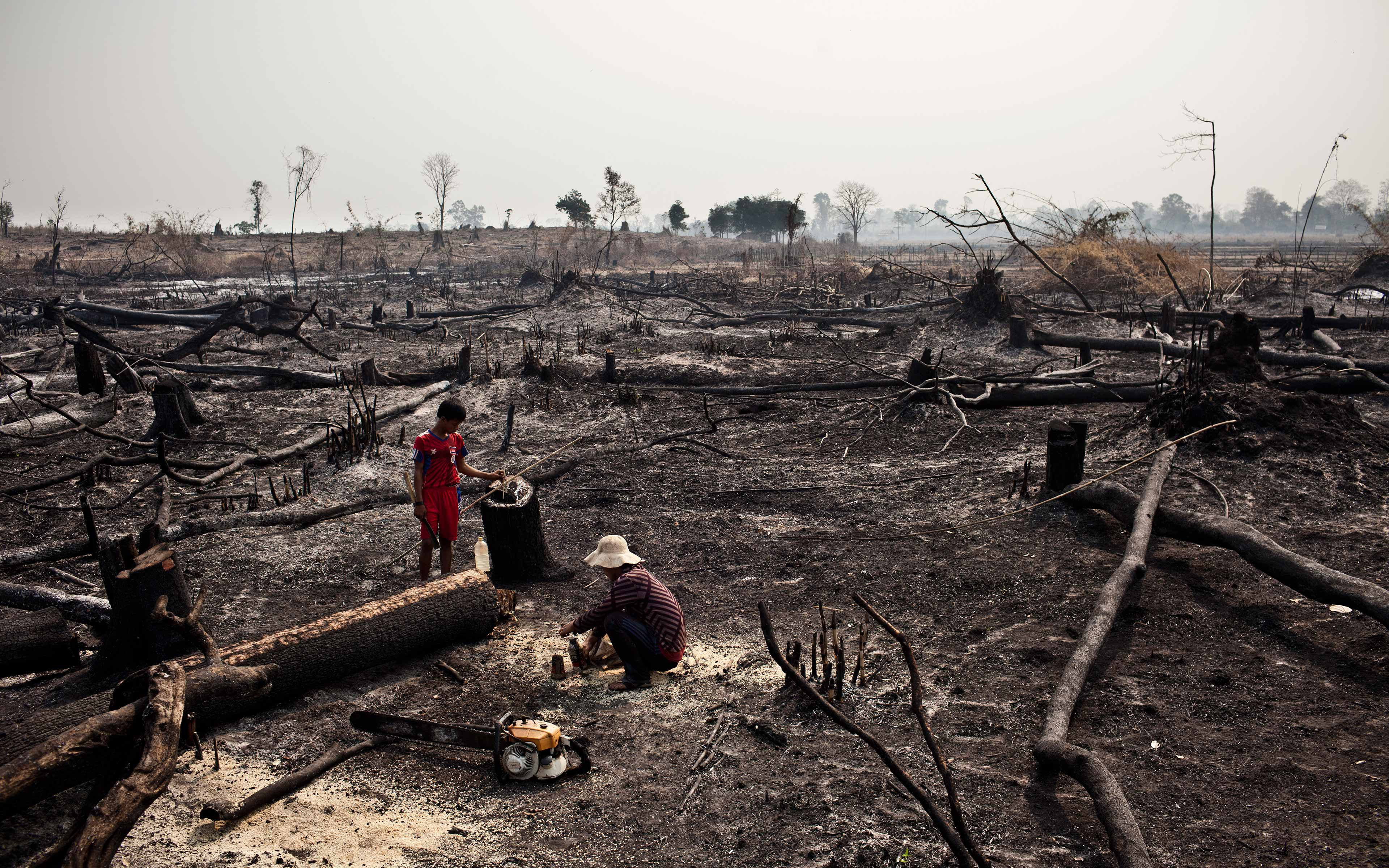 Ratanakiri province in Cambodia is losing its forest resources at an alarming rate, and indigenous communities that rely on them are sometimes affected in ways that threaten their livelihoods and culture.