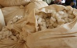 cotton-OUS-20438-1220x763.jpg