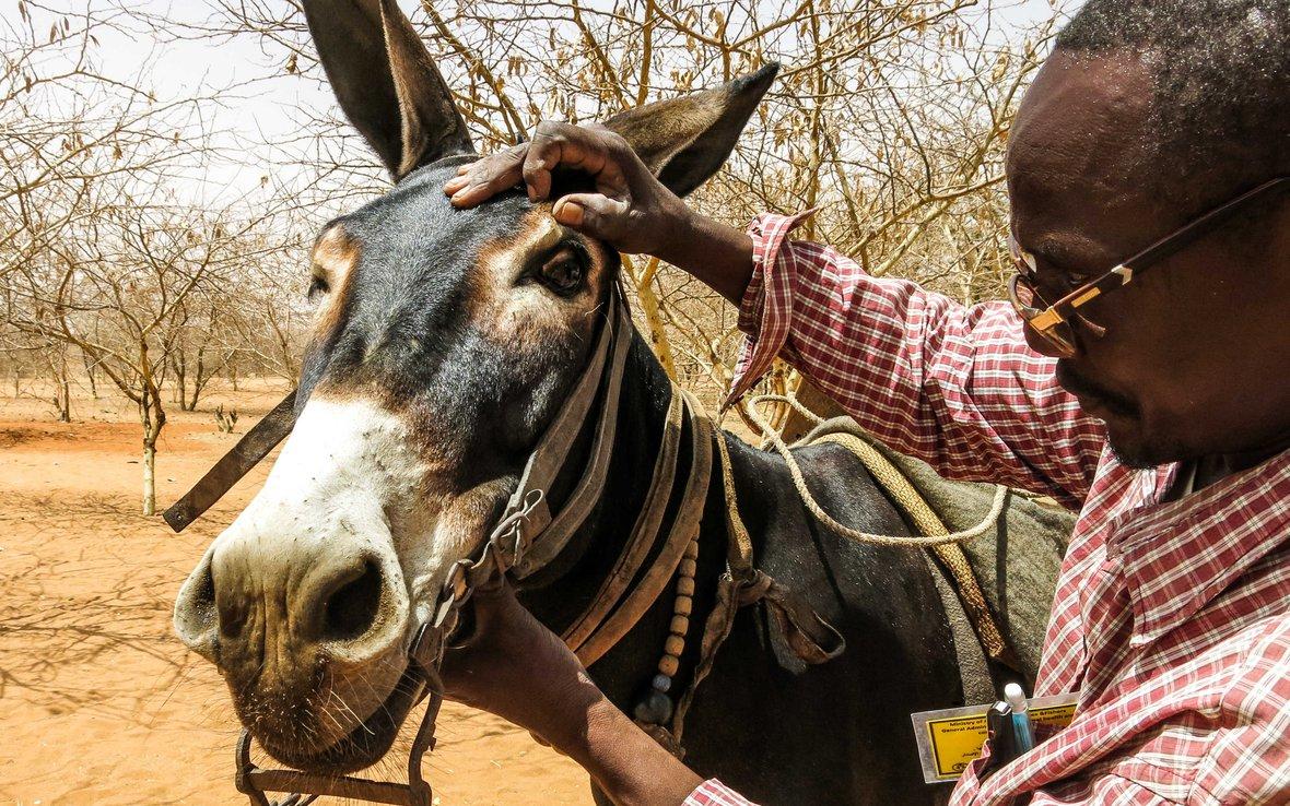 darfur-donkey-vet-oxfam_-web.jpg