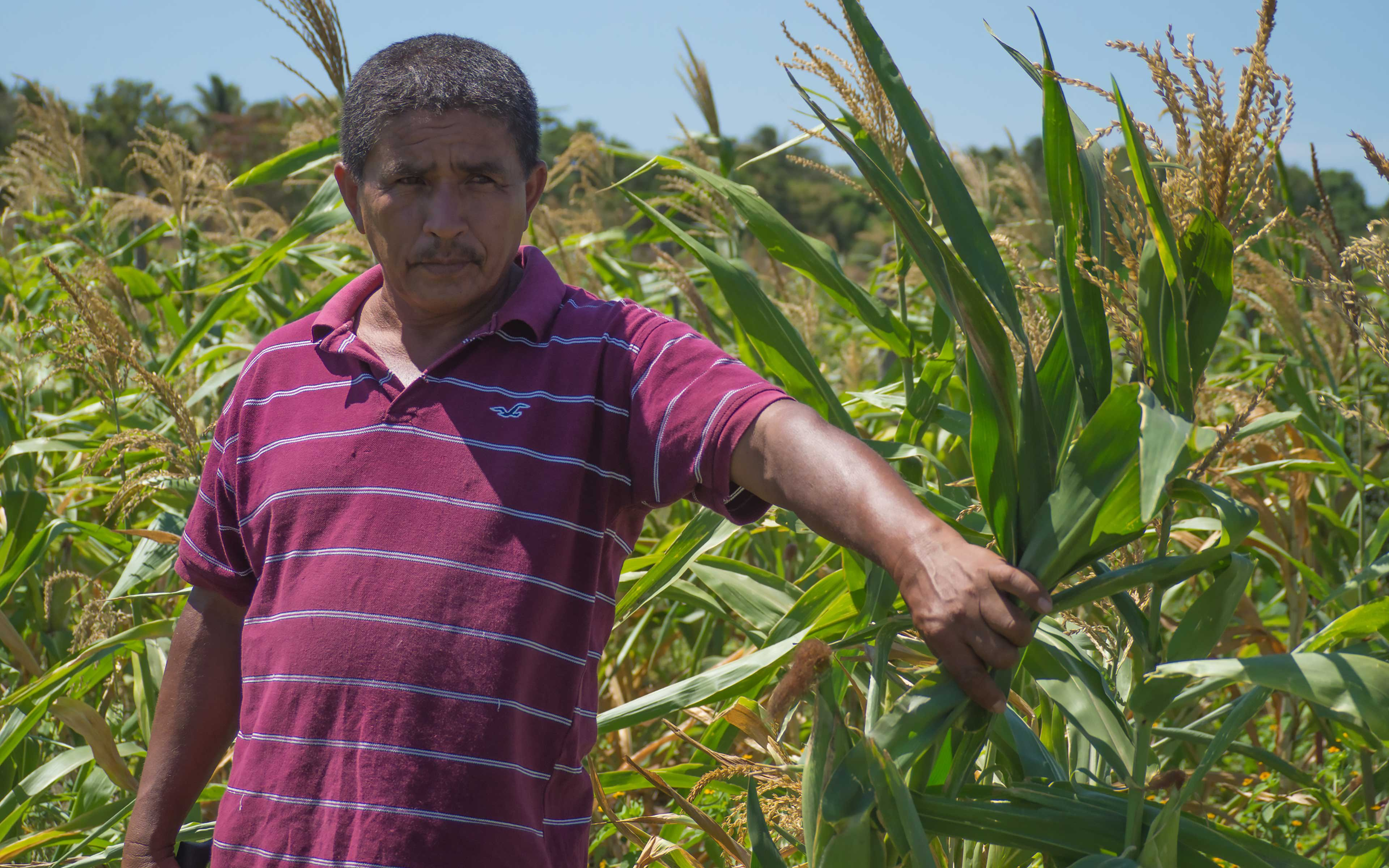 """""""When we used to spray chemical fertilizer on our crops, it would affect our brains and our bodies. I would feel dizzy and get a headache…the chemical would spill onto my back, and I broke out in rashes,"""" says farmer Felipe Cordova. """"With organic fertilizer, it's different."""""""