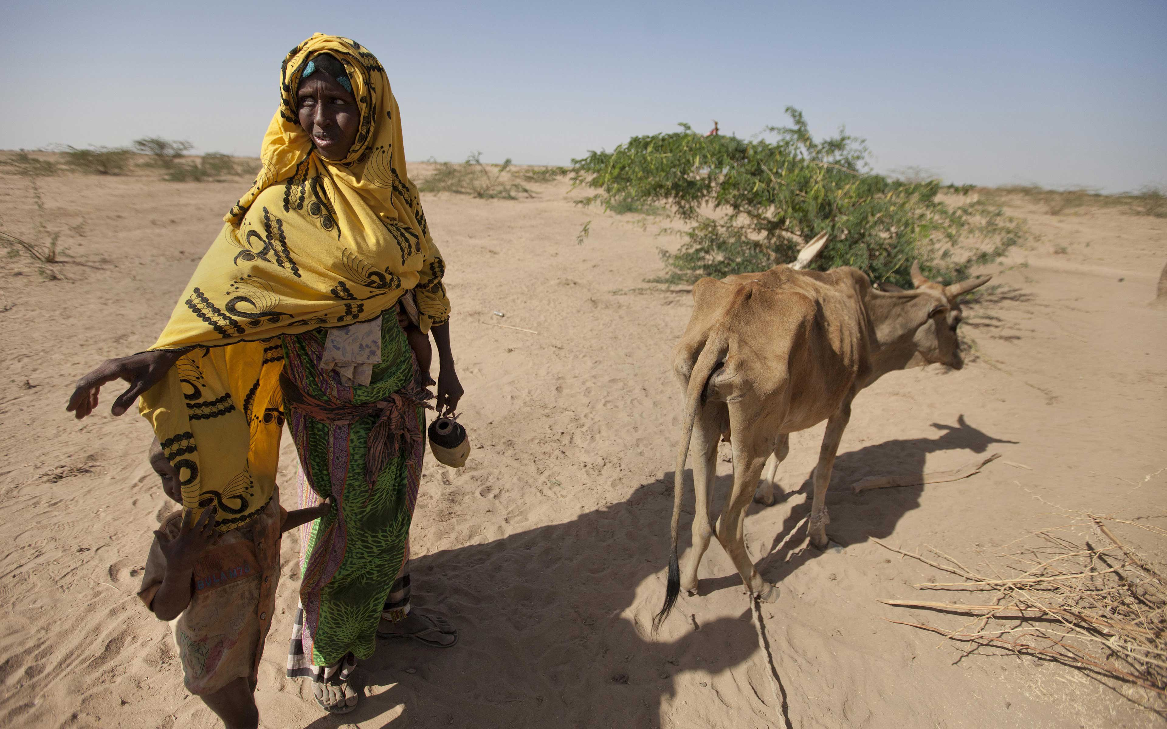 """Habodo Gele,  35,walks with her last remaining cow in Bisle, in the Siti zone of Ethiopia. """"I had 30 big and 30 small cattle,"""" she says. """"Only one cow remains. We share our food with our cow."""""""