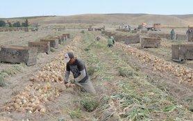 farmworkers-1220x763.jpg