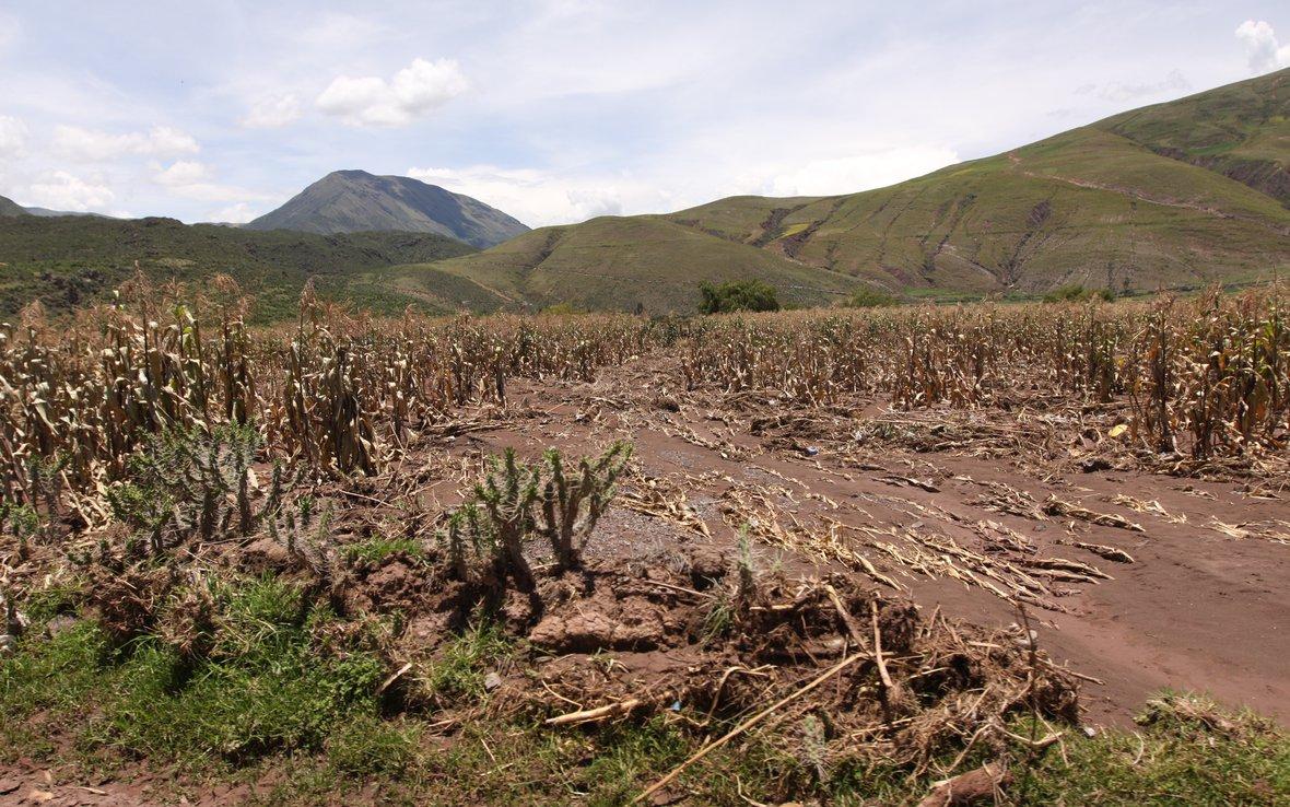 flooded-field-of-corn.jpg