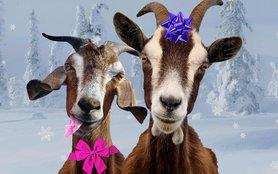 goats for lead image.jpg