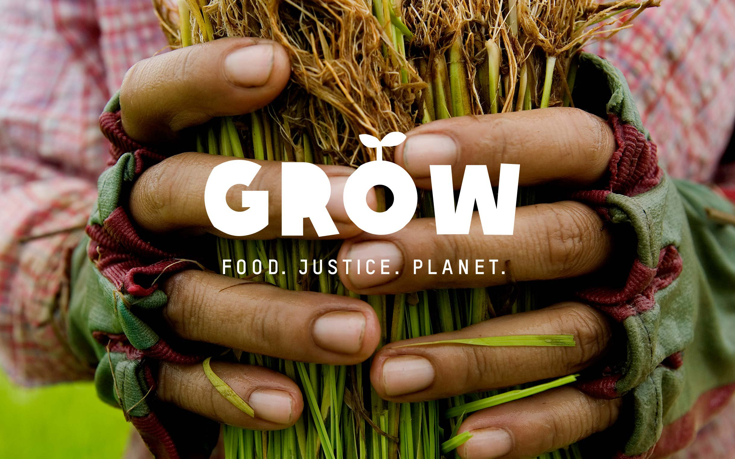 grow-campaign-rice-farmer-cambodia-ogb-46427.jpg