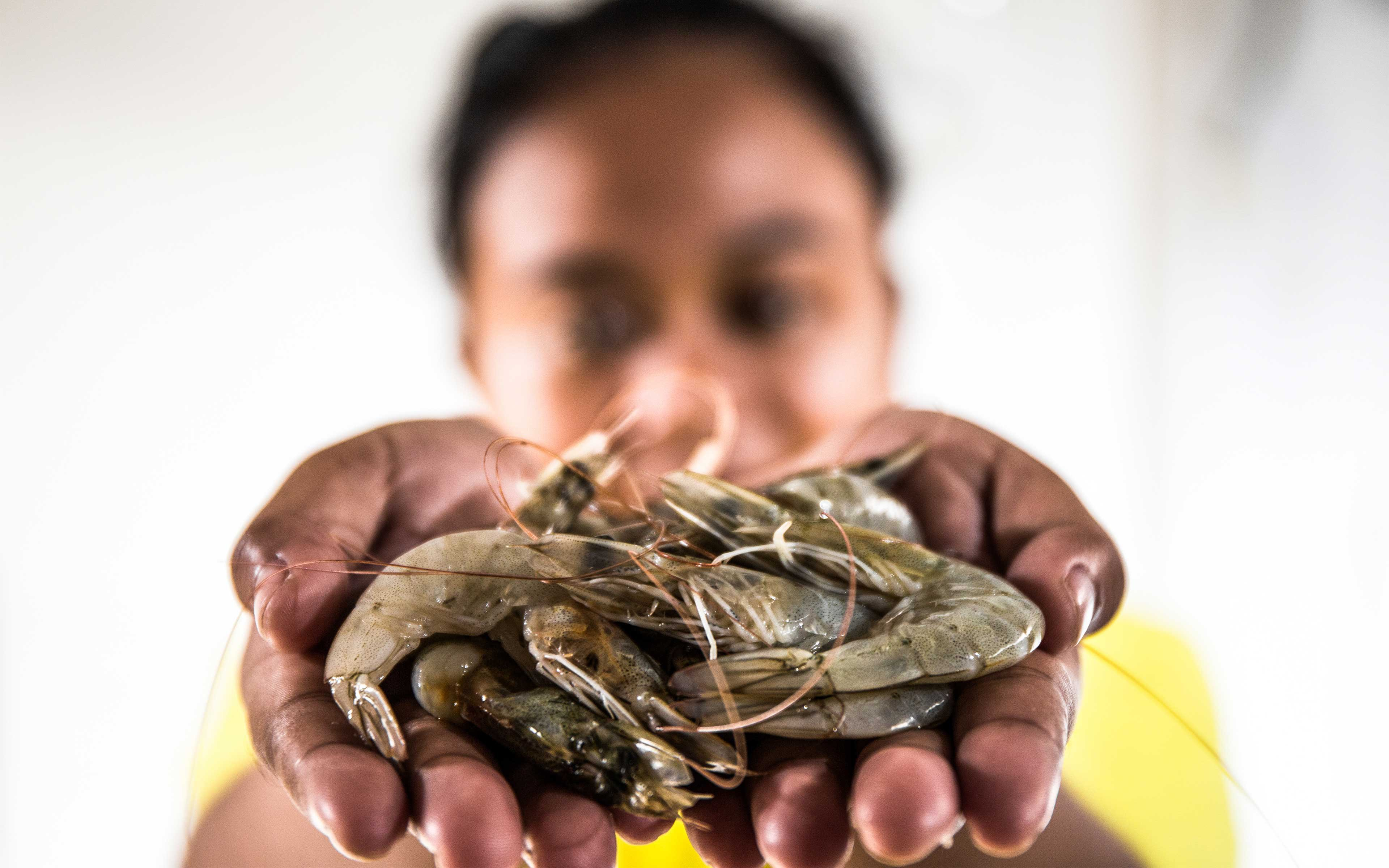 Melati worked at a shrimp processing plant in Indonesia to earn money for college. She found it difficult to peel 600 shrimp an hour, and the living and working conditions to be unacceptably dirty and dangerous.