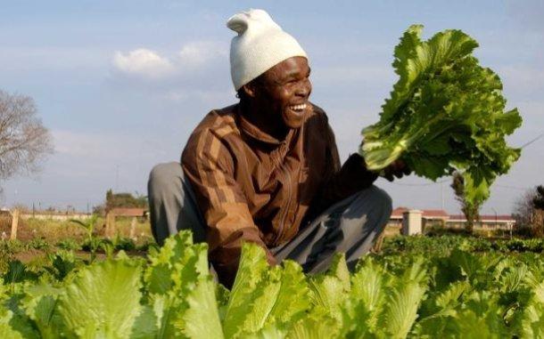man-farmer-lettuce-south-africa-ous-560_610x381.jpg