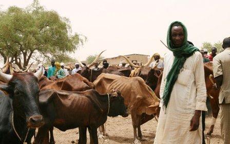 man-in-white-robe-selling-cattle.jpg