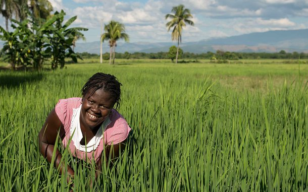 rice-farmer-haiti-sri-ous-47898.jpg