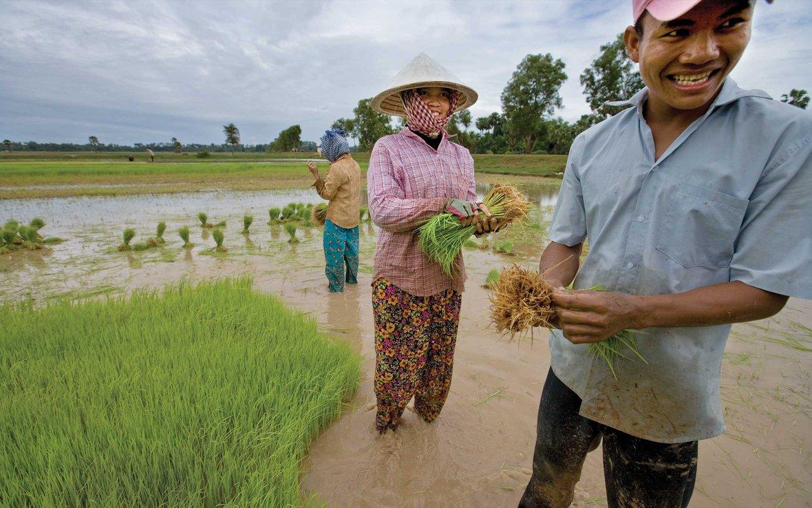 rice-farmers-cambodia-ogb-46426.jpg