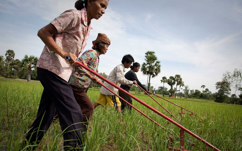 rice-farmers-weeder-cambodia-ous-33013.jpg