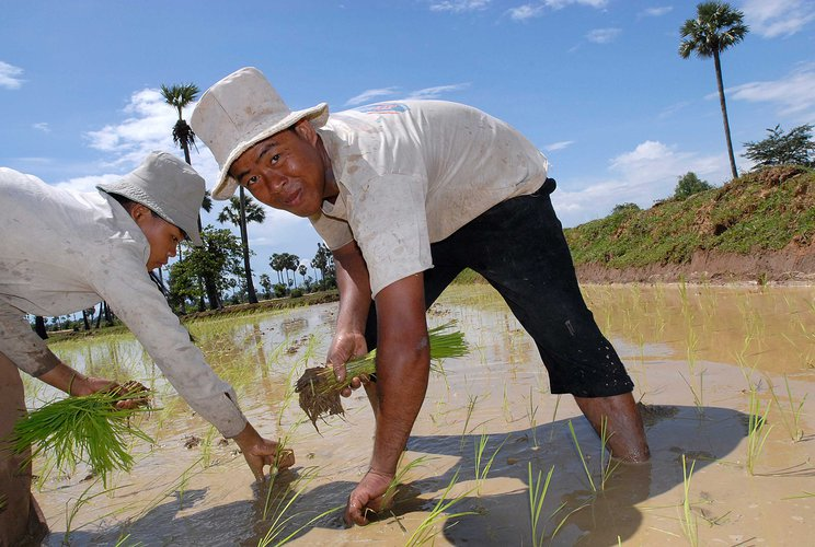system-of-rice-intensification-farmer-cambodia-ous-13674.jpg