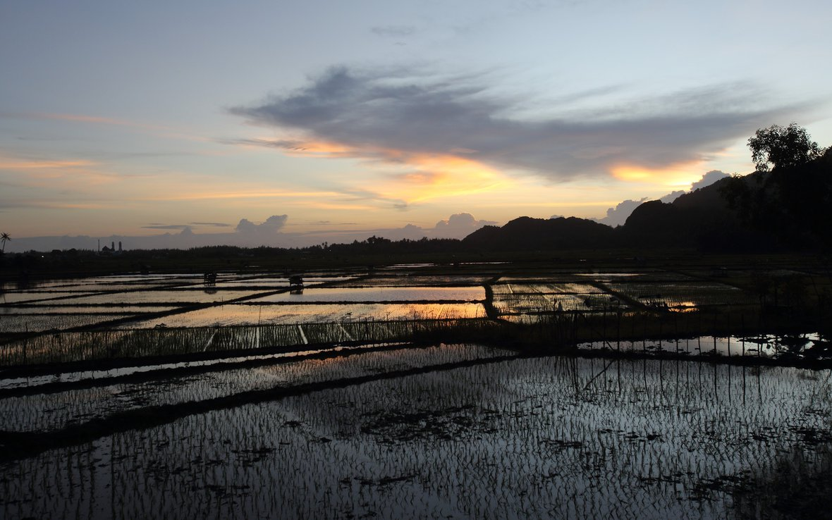 tsunami-sunset_89634lpr-rice-fields-oxfam.jpg