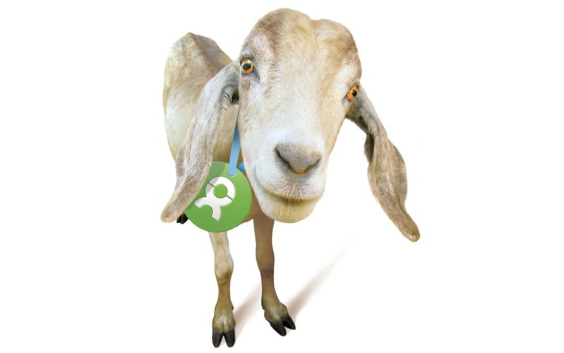 unwrapped-goat-2013-update-ous.jpg